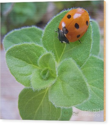 Wood Print featuring the photograph Ladybug And Oregano by Robert ONeil