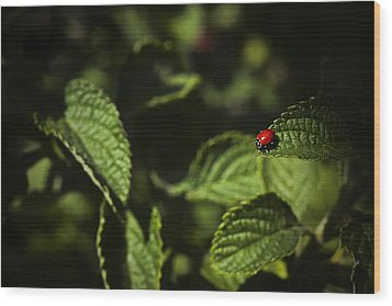 Wood Print featuring the photograph Ladybug by Bradley R Youngberg