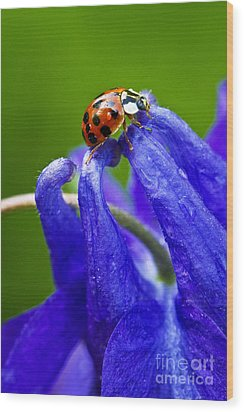 Wood Print featuring the photograph Ladybug by Carrie Cranwill