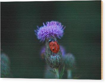 Ladybug Wood Print by Jeff Swan