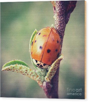 Wood Print featuring the photograph Ladybug  by Kerri Farley