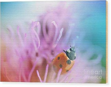 Ladybug Wood Print by Martin Capek