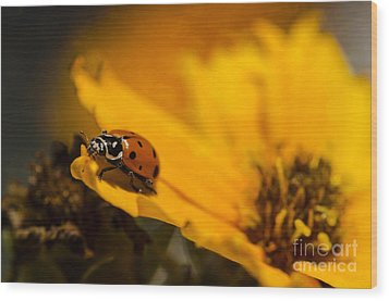 Ladybug Wood Print by Nicole Markmann Nelson