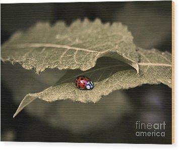 Ladybug Wood Print by Nora Blansett