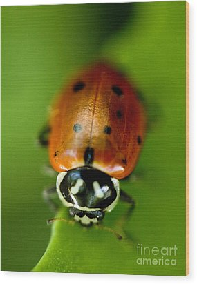 Ladybug On Green Wood Print by Iris Richardson