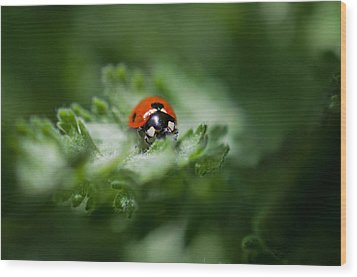 Ladybug On The Move Wood Print by Jordan Blackstone