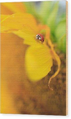 Ladybug Wood Print by Rebecca Skinner