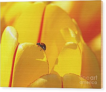 Wood Print featuring the photograph Ladybug - The Journey by Susan  Dimitrakopoulos