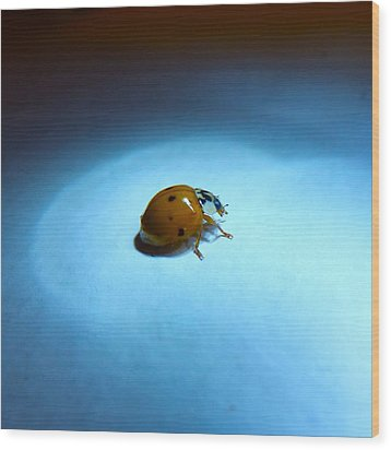 Ladybug Under Blue Light Wood Print