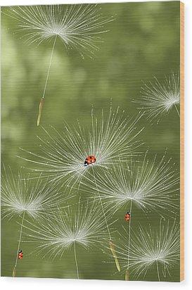 Ladybug Wood Print by Veronica Minozzi