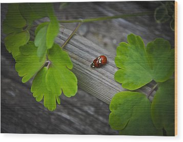Ladybugs Mating Wood Print by Aged Pixel