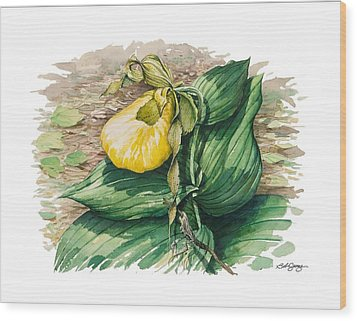 Ladyslipper Wood Print by Bob  George