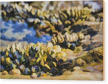 Laguna Beach Tide Pool Pattern 4 Wood Print by Scott Campbell