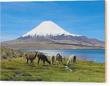 Lake Chungara Chilean Andes Wood Print by Kurt Van Wagner