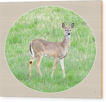 Lake Country Doe   Wood Print by Will Borden