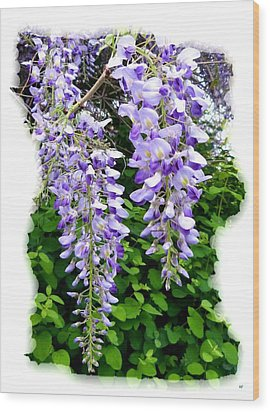 Lake Country Wisteria Wood Print by Will Borden
