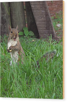 Wood Print featuring the photograph Lake Howard Squirrel 000 by Chris Mercer