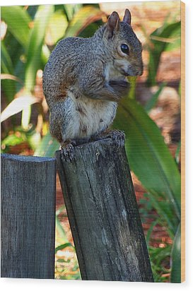 Wood Print featuring the photograph Lake Howard Squirrel 019 by Chris Mercer