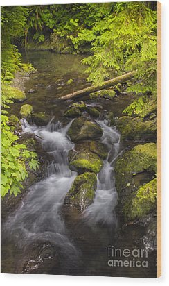 Lake Quinault Creek 2 Wood Print by Sonya Lang