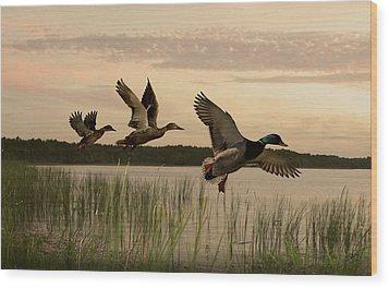 Lake Tarpon Ducks Wood Print by IM Spadecaller