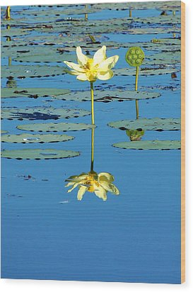 Lake Thomas Water Lily Wood Print