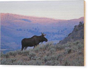 Lamar Valley Moose Wood Print by Jeff Lucas