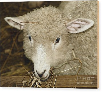 Lamb Wood Print by Raymond Earley