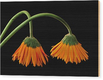 Lamp - Like Flowers Wood Print