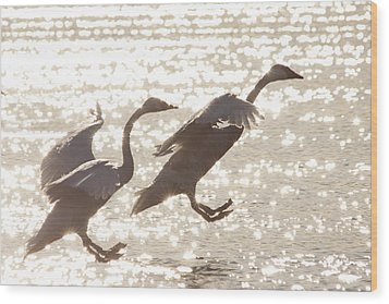 Wood Print featuring the photograph Landing by Inge Riis McDonald