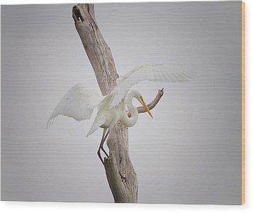 Landing Wood Print by Kim Hojnacki