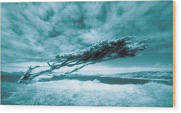 Lands End Wood Print by Daniel Furon