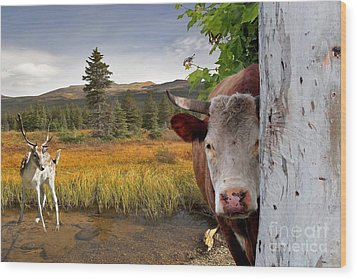 Landscape - Animals - Peek A Boo Cow Wood Print by Liane Wright