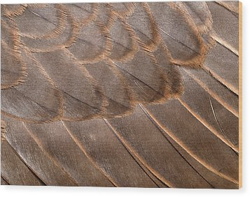 Lanner Falcon Wing Feathers Abstract Wood Print