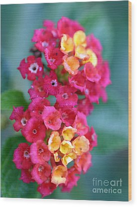 Wood Print featuring the photograph Lantana by Henrik Lehnerer