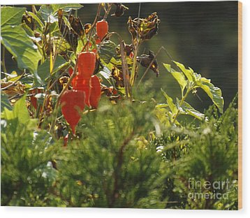 Wood Print featuring the photograph Lantern Plant by Brenda Brown