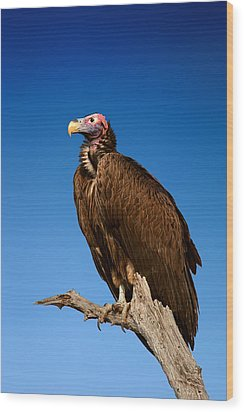 Lappetfaced Vulture Against Blue Sky Wood Print by Johan Swanepoel