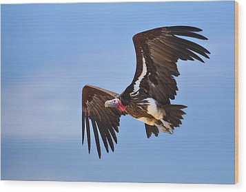 Lappetfaced Vulture Wood Print by Johan Swanepoel