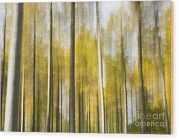 Larch Grove Blurred Wood Print by Anne Gilbert