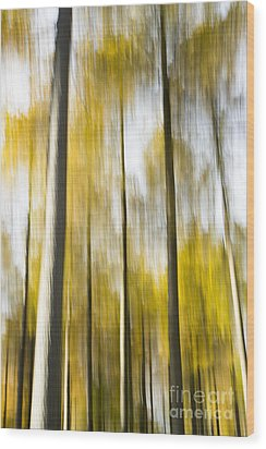 Larch In Abstract Wood Print by Anne Gilbert