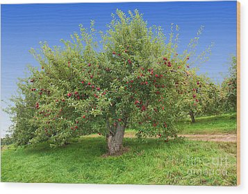 Large Apple Tree Wood Print by Anthony Sacco