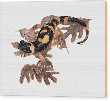 Large Blotched Salamander On Oak Leaves Wood Print by Cindy Hitchcock