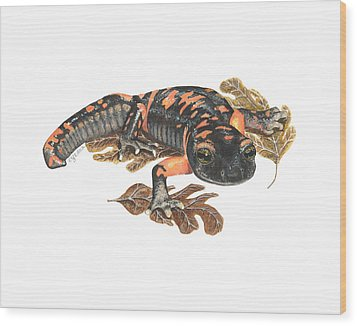 Large Blotched Salamander2 Wood Print by Cindy Hitchcock
