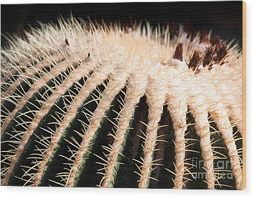 Large Cactus Ball Wood Print