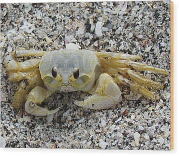Wood Print featuring the photograph Ghost Crab by Cynthia Guinn