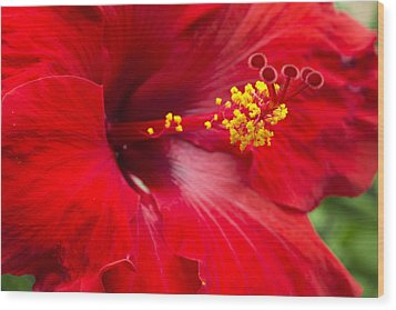 Large Red Hibiscus Wood Print