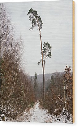 Large Trees In The Nature Park In Winter Wood Print by Matthias Hauser