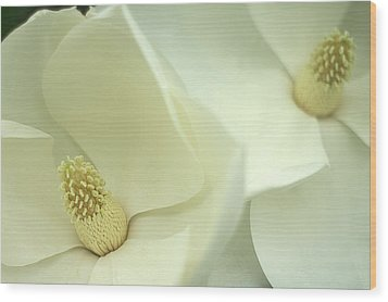 Wood Print featuring the photograph Large White Magnolias by Suzanne Powers