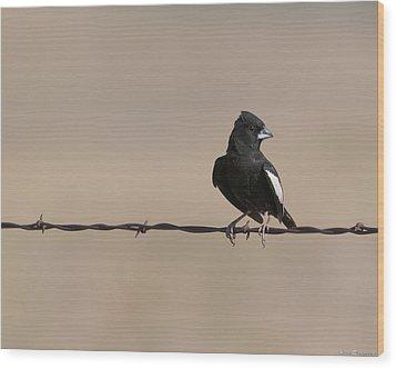 Lark Bunting Wood Print