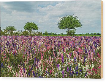 Larkspur Fields Forever Wood Print by Lynn Bauer