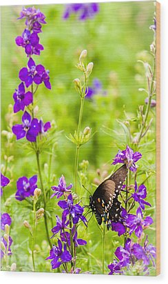 Larkspur Visitor Wood Print